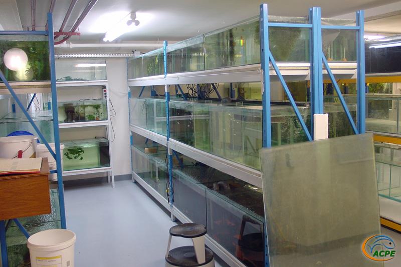 De janvier à juin 2002, réalisation des nouvelles batteries et aménagement de la salle d'activités