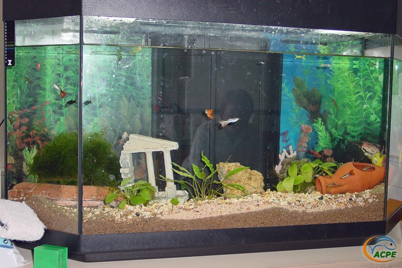 23 avril 2003, l'aquarium des élèves de l'hôpital