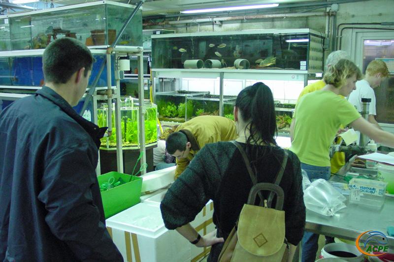Emballage et mise en caisse des poissons