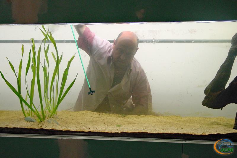 13 juillet 2003, Marc aménage l'aquarium pour les pacu.