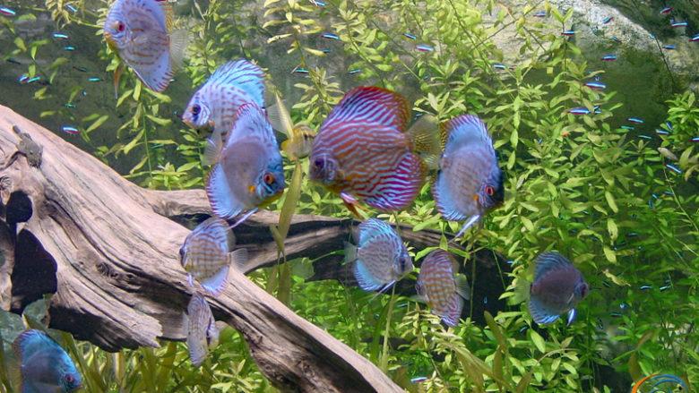 Visite de l'aquarium de la Porte Dorée le 6 mars 2004