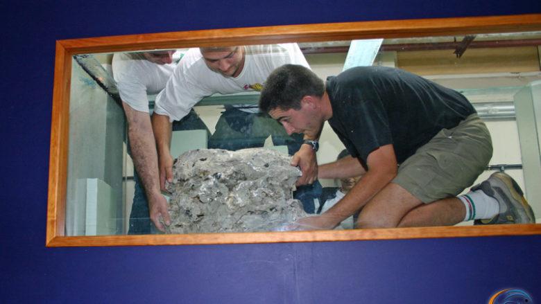 14 juillet 2004, aménagement et mise en route d'un 1000 litres Tanganyika