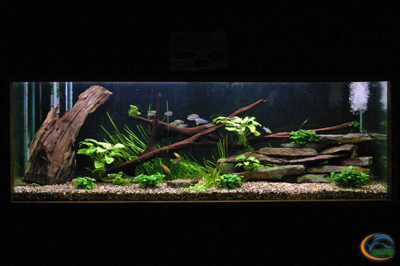 L'Aquarium africain, hors grands lacs, le 2 février 2005