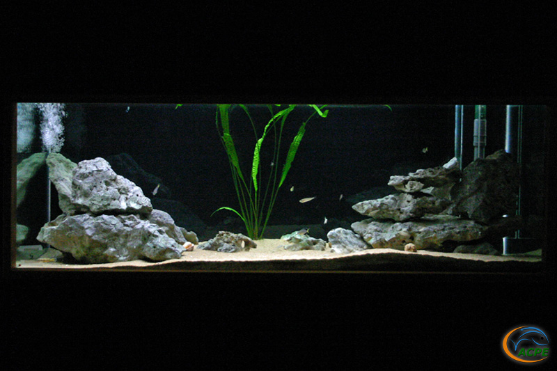 Aquarium Tanganyika au 2 février 2005