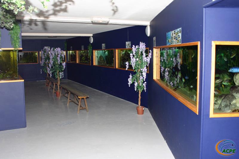 La salle d'exposition terminée avec ses équipements