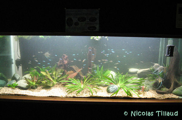 28 octobre 2007, reprise de l'aquarium amazonien