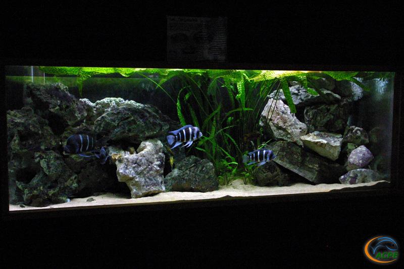 Aquarium Tanganyika, le 2 juillet 2008