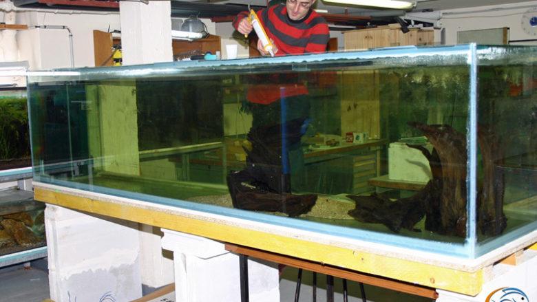Mars 2009, réalisation d'un aquarium de 1500 litres