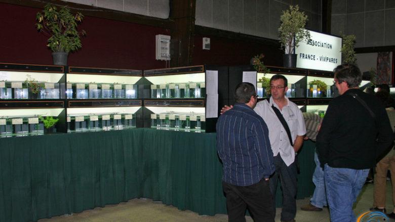 26 septembre 2009, Exposition vivipares de l'AFC à Pont l'Evêque