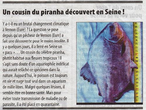 Paris Normandie du 7 août 2012 - Un cousin du piranha découvert en Seine