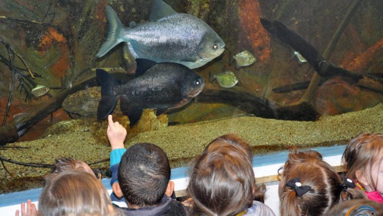 6 mai 2014, visite des élèves de l'école Maria Montessori