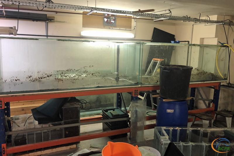 23 février 2020 : vidange des deux premier aquariums de la rangée