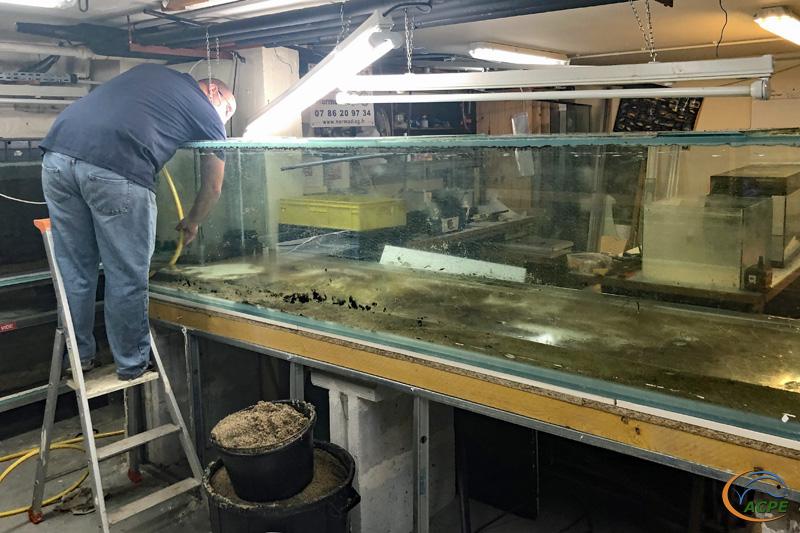 17 juin, préparation du décollage des glaces de l'aquarium de 1500 litres