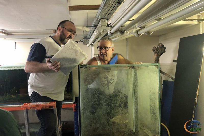 9 février 2020, le sable est enlevé de l'aquarium