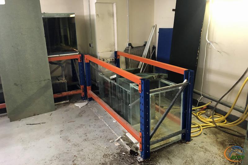 9 février 2020, l'aquarium est parti au lavage