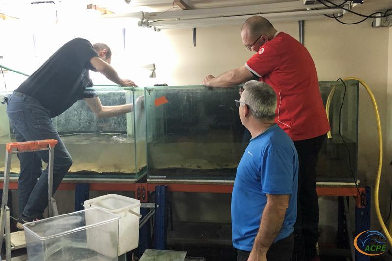 12 février 2012, vidage des deux aquariums de 750 litres