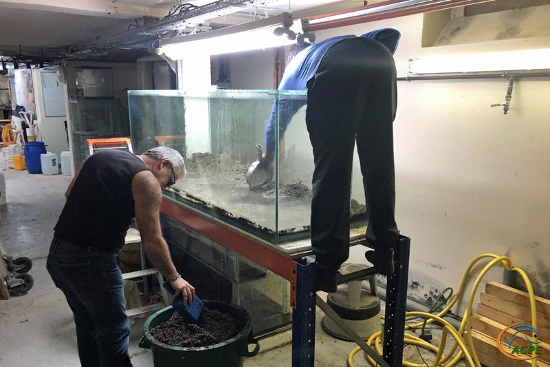 4 mars 2020 : Vidange du dernier aquarium de la salle d'exposition
