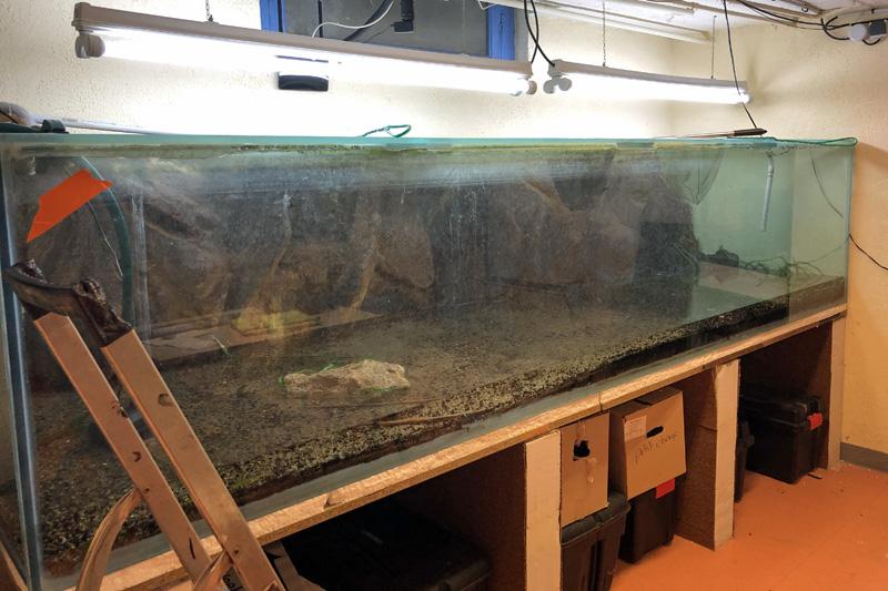 9 octobre 2019 - l'aquarium de 3000 litres se vide