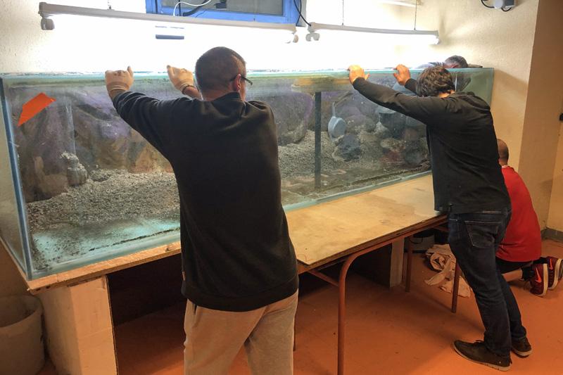 Démontage de l'aquarium de 3000 litres : décollage de la façade