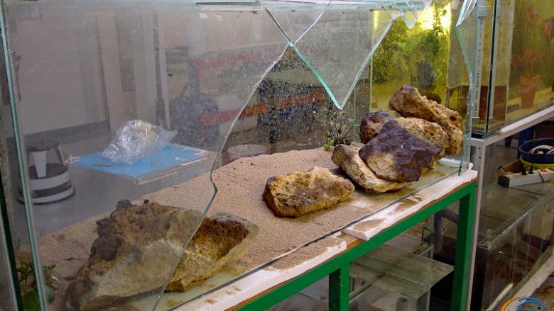 L'aquarium cassé