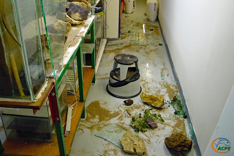Les dégâts au pied de l'aquarium