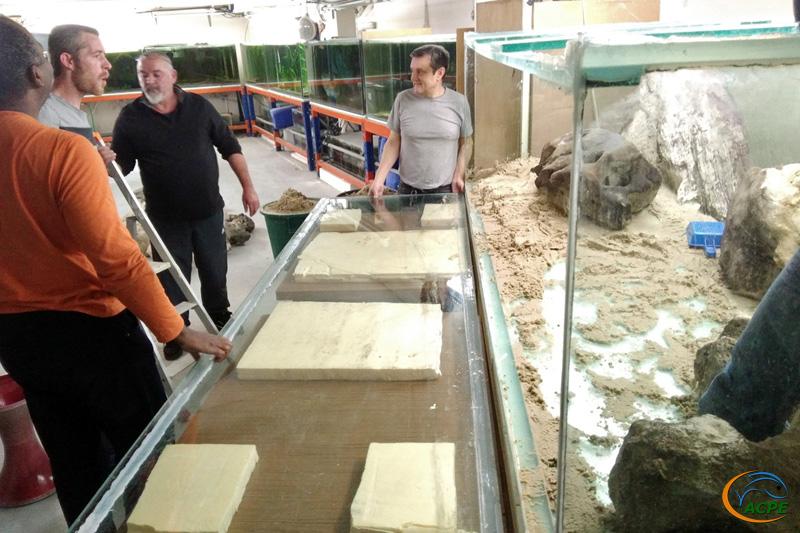 Décollage de la façade avant de l'aquarium de 3000 litres de la salle d'expo