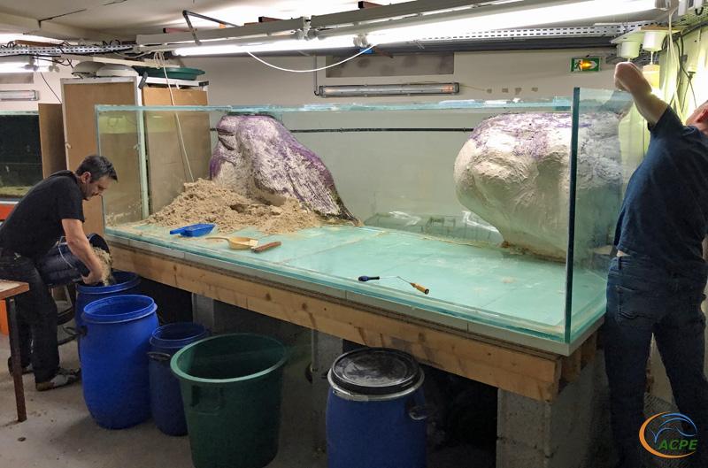 Enlèvement du reste de sable et décollage du coté droit de l'aquarium.