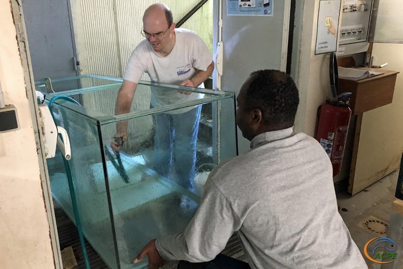 19 janvier 2020, nettoyage du second aquarium