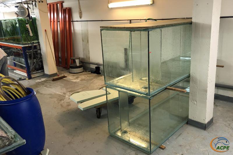 19 janvier 2020, les deux premiers aquariums remisés et prêts au déménagement