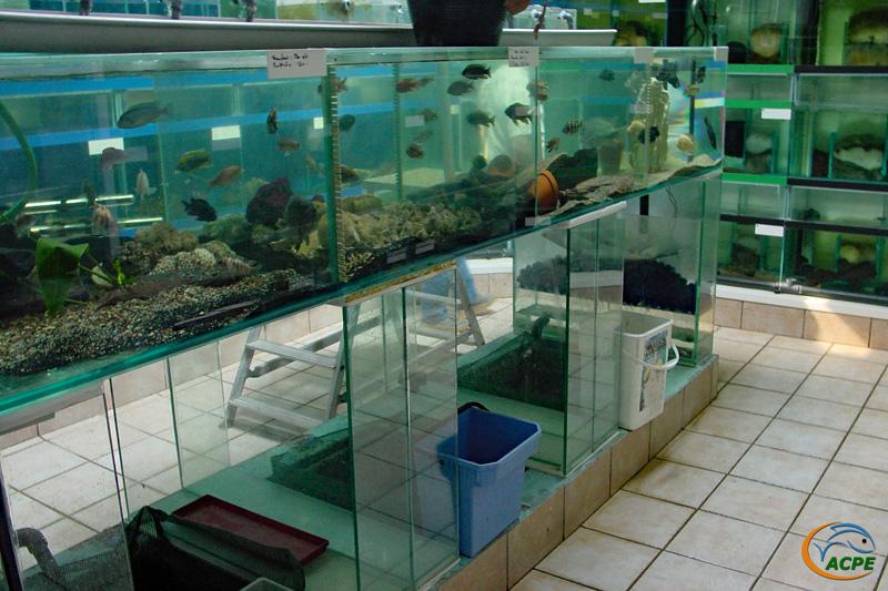 Salle de vente et de reproduction. Au centre, une batterie sur supports en verre au-dessus d'une fosse pleine d'eau