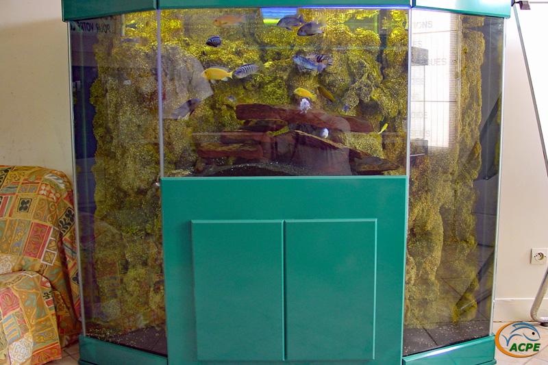 Un aquarium avec deux fossess