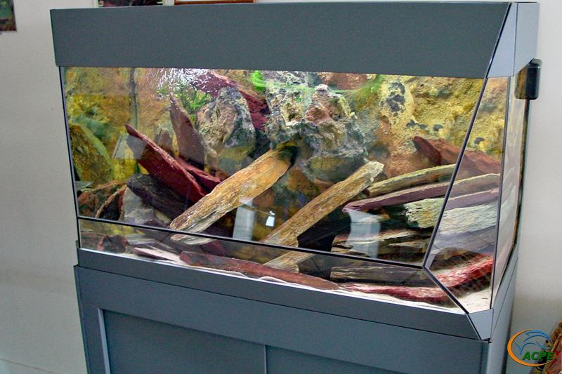 Aquariums avec paratilapia cf. polleni