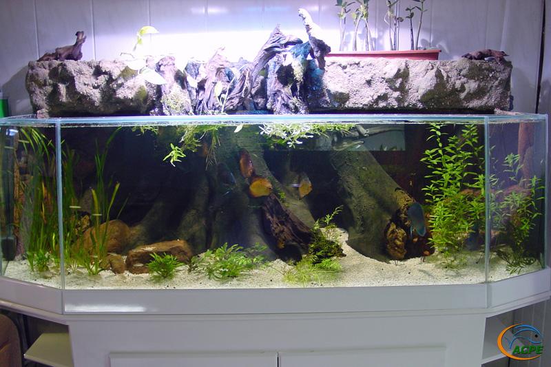 Un aquarium ouvert, avec décors extérieur