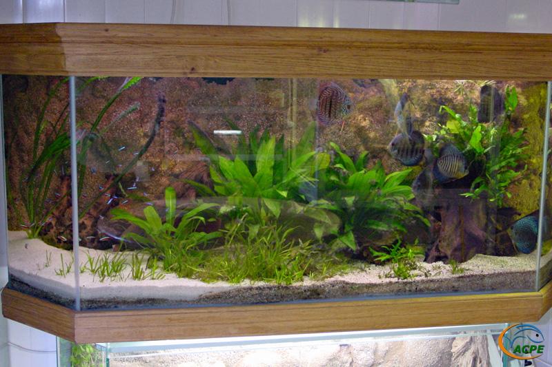Aquarium avec discus