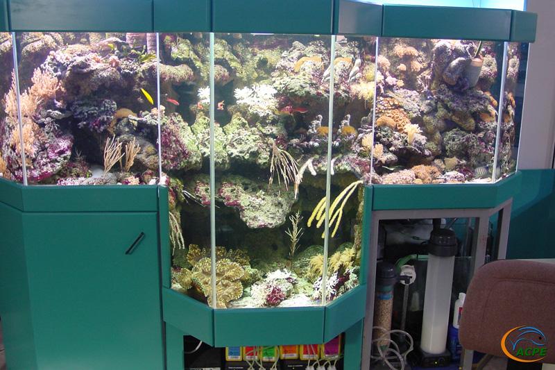 …aux formes les plus complexe. Aquarium avec fausse centrale