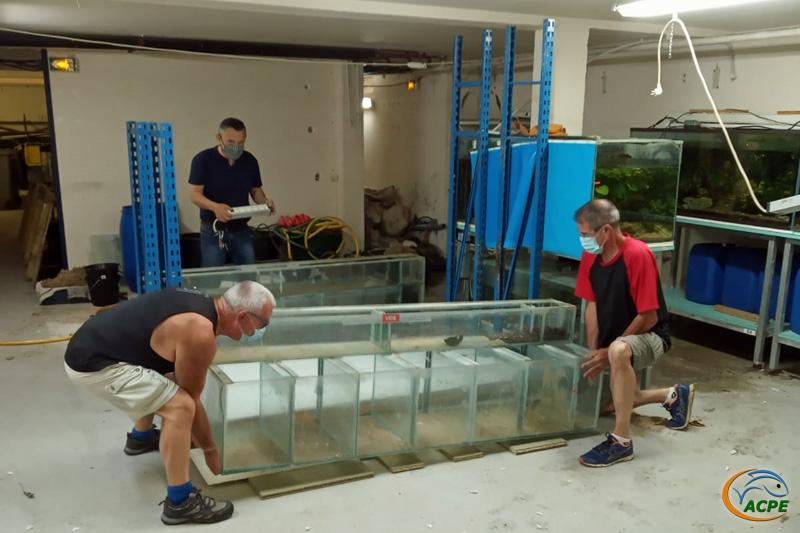 Dimanche 4 juillet, démontage d'une batterie d'aquariums, en vue de son transfert