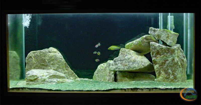 L'aquarium Victoria aménagé dans un 750 litres (septembre 2003)