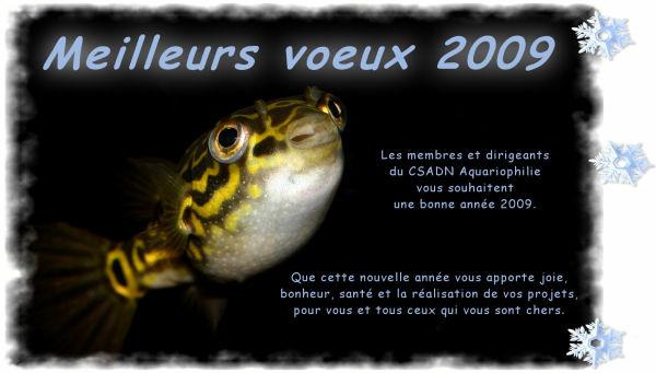 Carte de vœux 2009